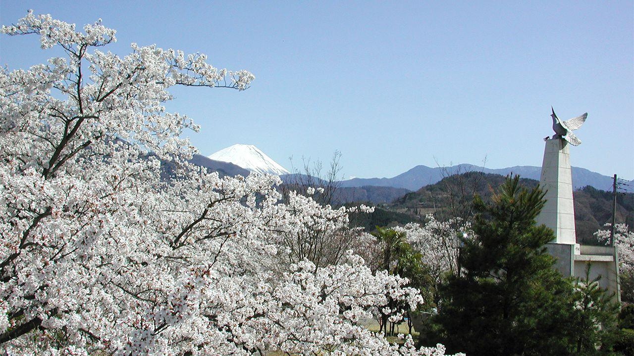 Japan's Top 100 Blossoms: Ōboshi Park (Yamanashi)